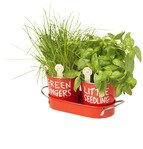 Grow Your Own Herbs by Jamie Oliver